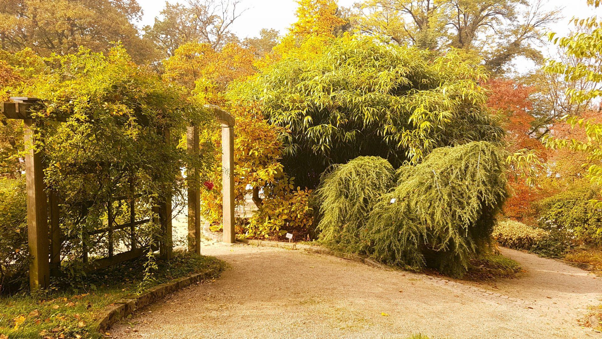 Шикарная растительность. Японский парк в Линце.