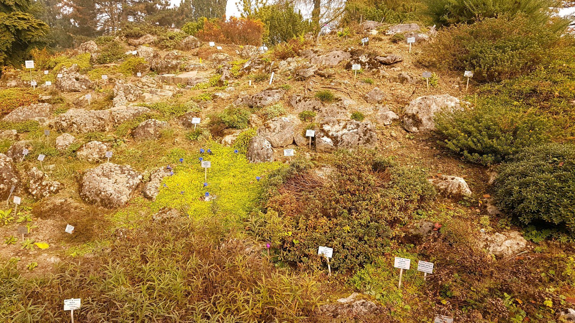 Местами полянки и склоны напоминают кладбище из табличек с названиями