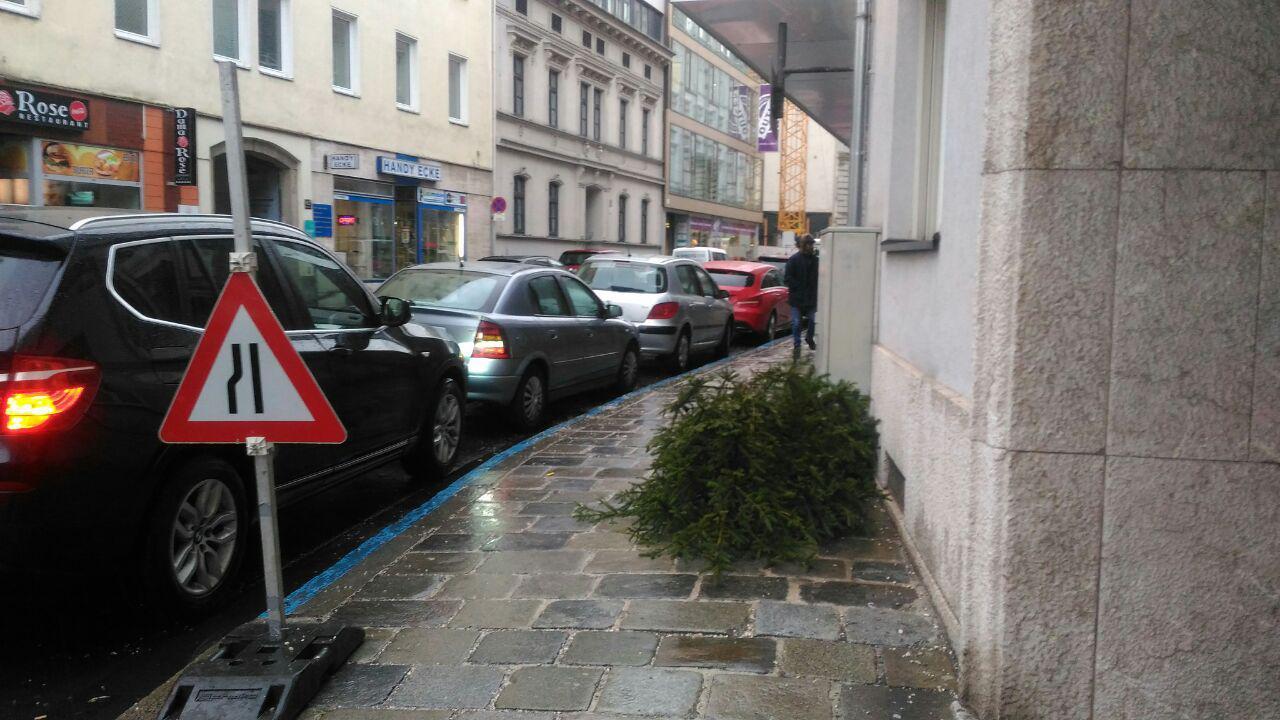 Что делать с рождественским деревом в австрийском Линце?