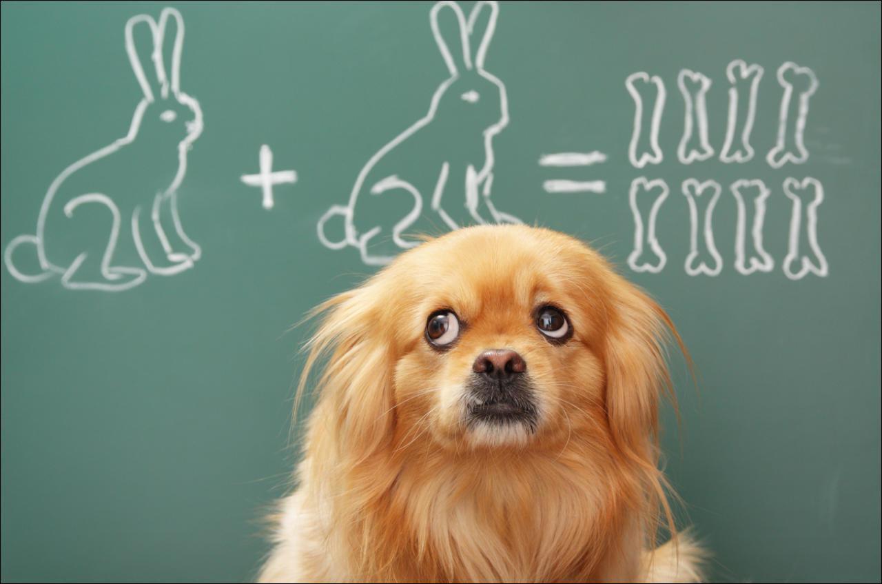В Вене владельцев собак «опасных» пород обяжут проходить образовательный курс