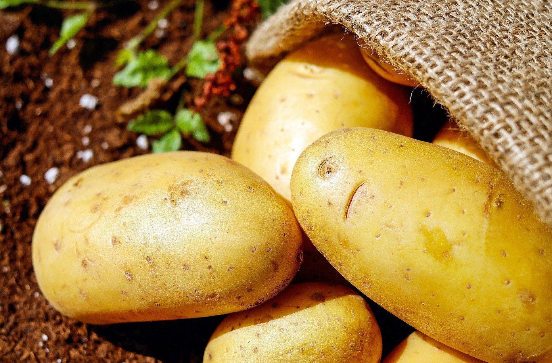 СМИ Австрии предупреждают: не следует делать большие запасы картофеля на время карантина