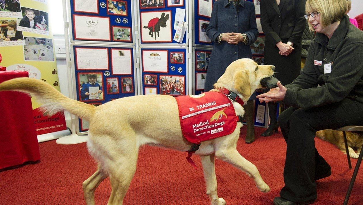 СМИ Австрии: собаки помогают бороться с вирусом Covid-19