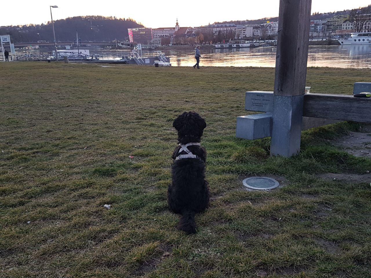 """Собака. Линц. Австрия. Дунай. Проект """"Жизнь эмигранта"""" - авторские статьи о моей эмиграции в Австрию"""