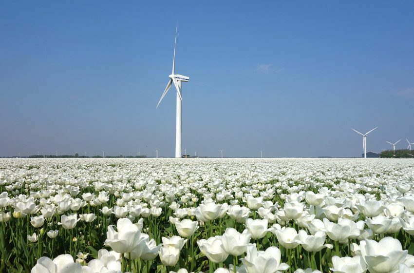 Исследование не выявило вредное воздействие ветряных электростанций